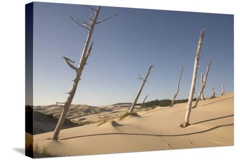 Dead Conifer Trees in Sand Dunes Along John Dellenback Trail, Oregon Dunes National Recreation Area-Phil Schermeister-Stretched Canvas Print