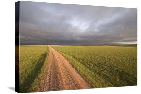 A Road Through Oglala National Grassland in Nebraska-Phil Schermeister-Stretched Canvas Print