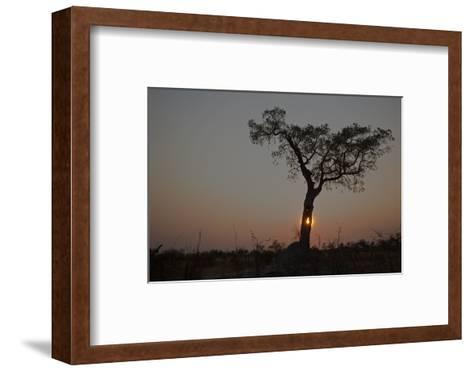 The Sun Setting Behind a Silhouetted Tree-Beverly Joubert-Framed Art Print