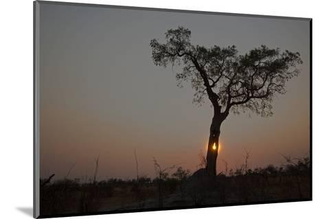 The Sun Setting Behind a Silhouetted Tree-Beverly Joubert-Mounted Photographic Print