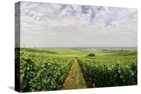 A Vineyard in Alsace, France-Macduff Everton-Stretched Canvas Print