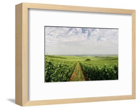 A Vineyard in Alsace, France-Macduff Everton-Framed Art Print