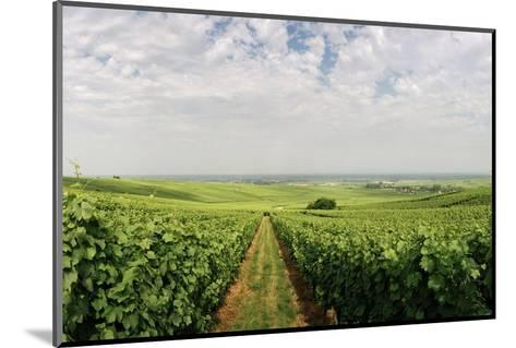 A Vineyard in Alsace, France-Macduff Everton-Mounted Photographic Print