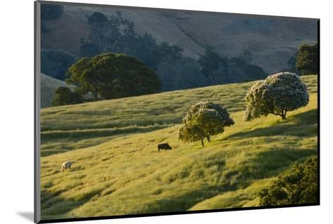 Cattle Feed in a Pasture-Paul Colangelo-Mounted Photographic Print
