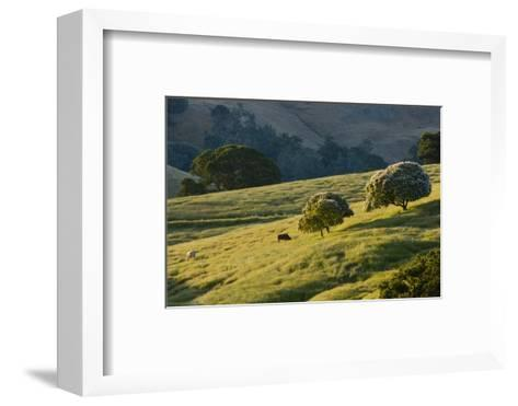 Cattle Feed in a Pasture-Paul Colangelo-Framed Art Print