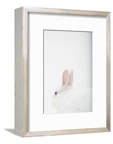 Close Up Portrait of a White Domestic Rabbit, the Kind Used in Laboratory Testing-Rebecca Hale-Framed Art Print