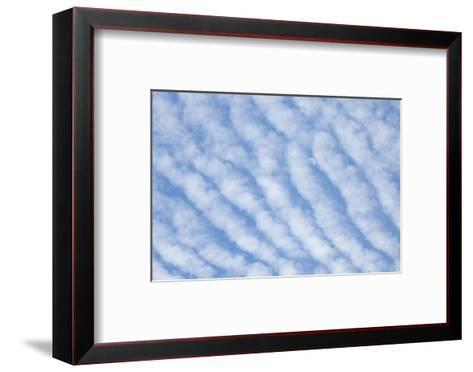 Moon and Blue Sky Behind Rows of Cirrocumulus Clouds-Paul Colangelo-Framed Art Print