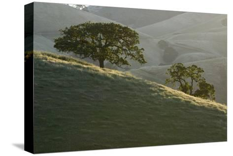 The Grassy Hills of Mount Diablo State Park-Paul Colangelo-Stretched Canvas Print