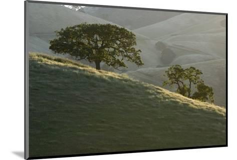 The Grassy Hills of Mount Diablo State Park-Paul Colangelo-Mounted Photographic Print