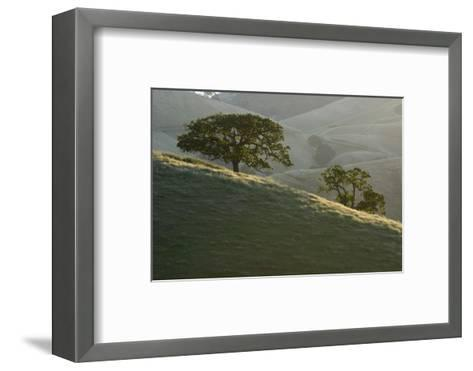 The Grassy Hills of Mount Diablo State Park-Paul Colangelo-Framed Art Print