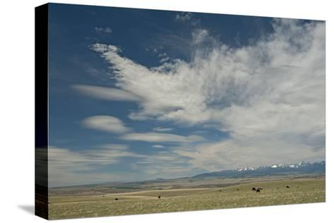 Cirrus and Lenticular Clouds over Prairies Surrounding the Crazy Mountains, Near Livingston-Gordon Wiltsie-Stretched Canvas Print