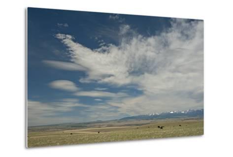 Cirrus and Lenticular Clouds over Prairies Surrounding the Crazy Mountains, Near Livingston-Gordon Wiltsie-Metal Print