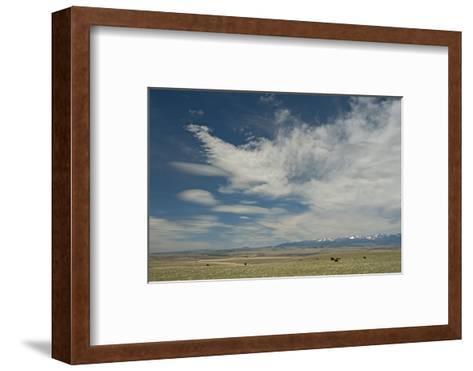 Cirrus and Lenticular Clouds over Prairies Surrounding the Crazy Mountains, Near Livingston-Gordon Wiltsie-Framed Art Print