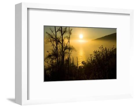 Sweet Fennel, Foeniculum Vulgare, Silhouetted Against a Setting Sun in Big Sur-Paul Colangelo-Framed Art Print