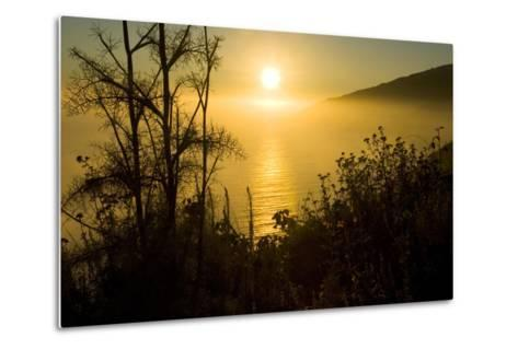 Sweet Fennel, Foeniculum Vulgare, Silhouetted Against a Setting Sun in Big Sur-Paul Colangelo-Metal Print