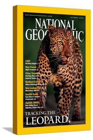 Cover of the October, 2001 National Geographic Magazine-Kim Wolhuter-Stretched Canvas Print