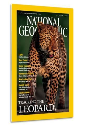 Cover of the October, 2001 National Geographic Magazine-Kim Wolhuter-Metal Print