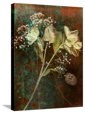 Wilted White Rose and Baby's Breath-Robert Cattan-Stretched Canvas Print