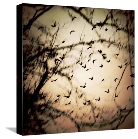 Birds Flying from Tree-Ewa Zauscinska-Stretched Canvas Print