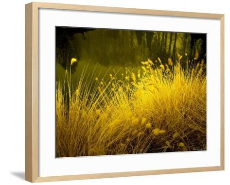Golden Plants along River with Reflections of Trees-Jan Lakey-Framed Art Print