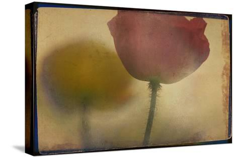 Close up of Flower Stem-Mia Friedrich-Stretched Canvas Print