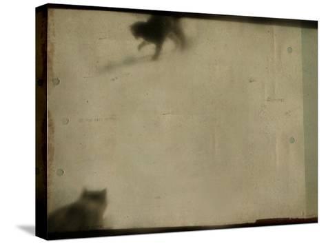 Blurred Cats-Mia Friedrich-Stretched Canvas Print