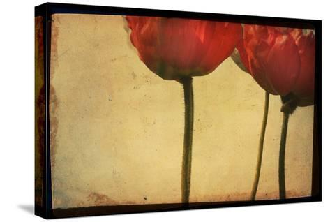 Study of Red Poppies-Mia Friedrich-Stretched Canvas Print