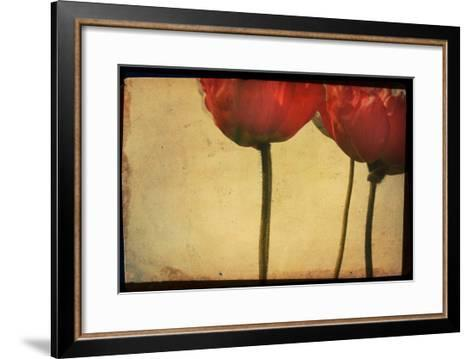 Study of Red Poppies-Mia Friedrich-Framed Art Print