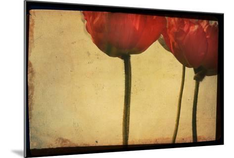 Study of Red Poppies-Mia Friedrich-Mounted Photographic Print