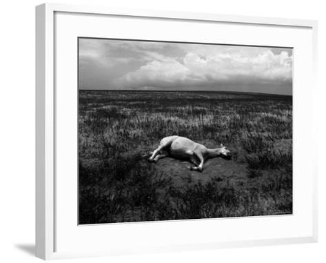 Horse Lying on Side in Field-Krzysztof Rost-Framed Art Print