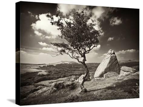 Shuffletags-David Baker-Stretched Canvas Print