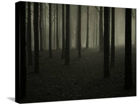 Buzztube-David Baker-Stretched Canvas Print