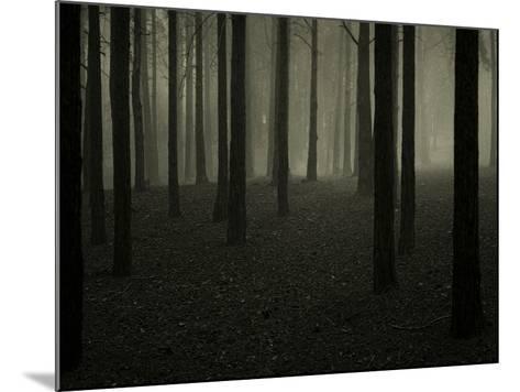 Buzztube-David Baker-Mounted Photographic Print