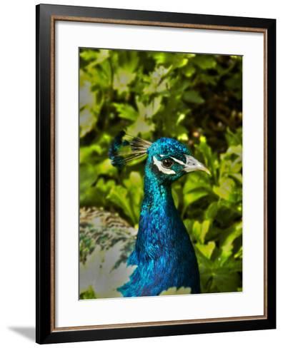 Edgelist-Tim Kahane-Framed Art Print