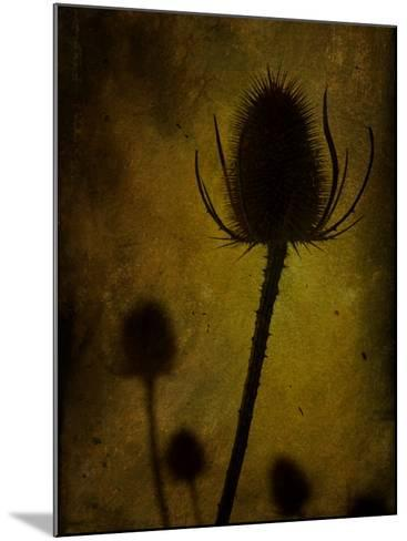 Trugen-Tim Kahane-Mounted Photographic Print