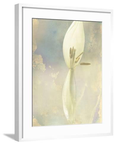 Tulip Fading-Mia Friedrich-Framed Art Print