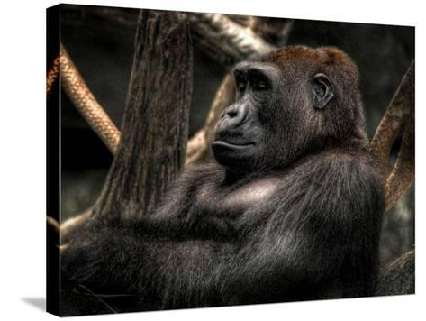 Gorilla-Stephen Arens-Stretched Canvas Print