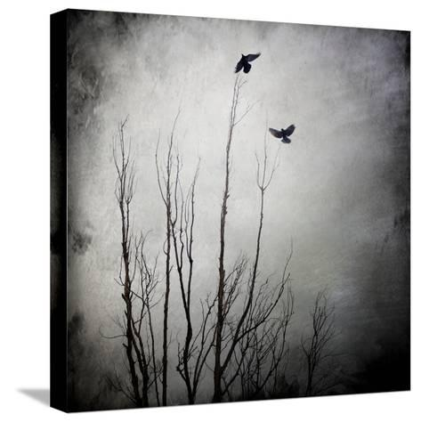 Two Bird Flying Near a Tree-Luis Beltran-Stretched Canvas Print