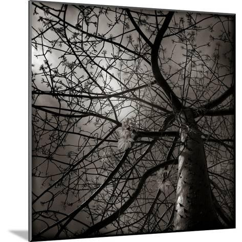 Looking Up at a Tree with Flowers-Luis Beltran-Mounted Photographic Print