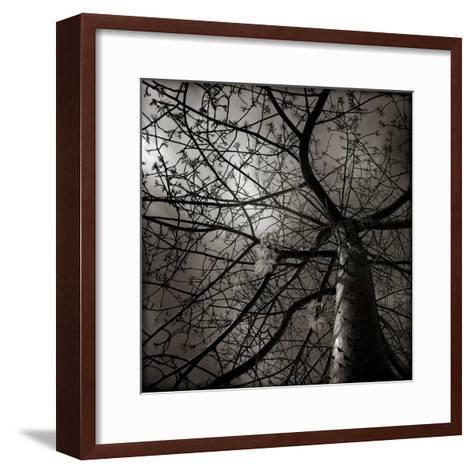 Looking Up at a Tree with Flowers-Luis Beltran-Framed Art Print