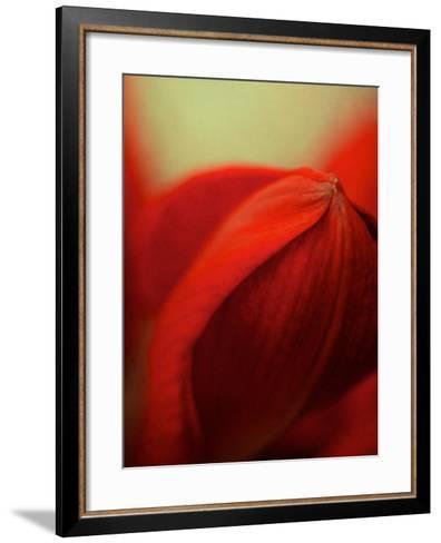 Study of an Amaryllis V-Mia Friedrich-Framed Art Print