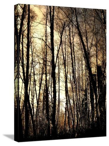 Winter Forest Light-Jody Miller-Stretched Canvas Print