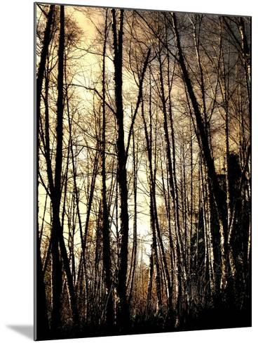Winter Forest Light-Jody Miller-Mounted Photographic Print