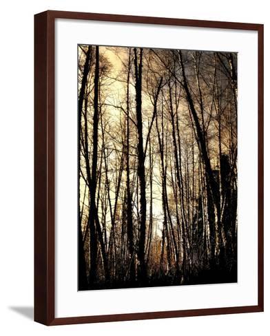 Winter Forest Light-Jody Miller-Framed Art Print