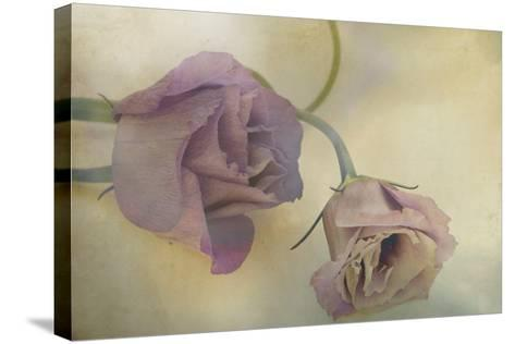 Lisianthus I-Mia Friedrich-Stretched Canvas Print