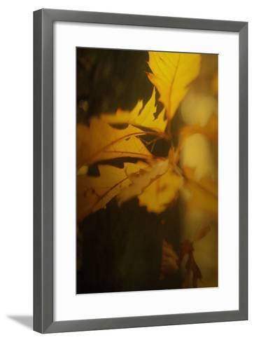 Study of Autumn Leaves VI-Mia Friedrich-Framed Art Print