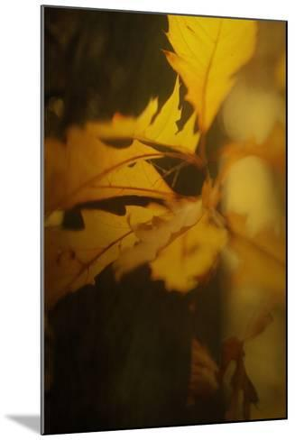 Study of Autumn Leaves VI-Mia Friedrich-Mounted Photographic Print