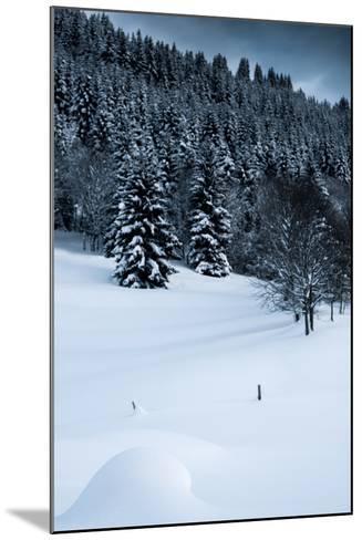 Alpine Flurry-Craig Howarth-Mounted Photographic Print
