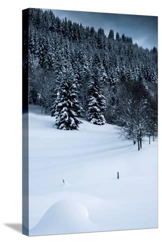 Alpine Flurry-Craig Howarth-Stretched Canvas Print