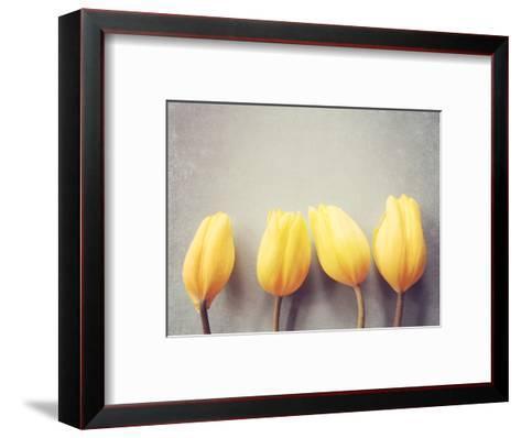 Four Yellow Tulips Against a Textured Grey Blue Background-Susannah Tucker-Framed Art Print